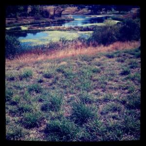 38-and-a-Half Street Pond